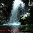 滝  (投稿)