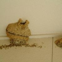 わが家のツバメの巣