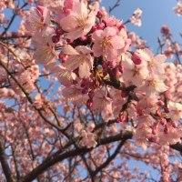 🌸🌸春うらら🌸🌸