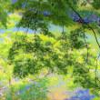 ♪ 城山(しろやま)の、青葉モミジの木陰より ♪