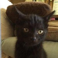 黒猫チビすばる〜黒猫飼いの醍醐味〜