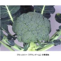 【4/25】サカタのタネ、ブロッコリーの新品種「グランドーム」の種子を発売