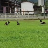 Spa  Dog  Run   秩父梵の湯