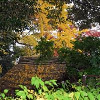 晩秋の戸定邸