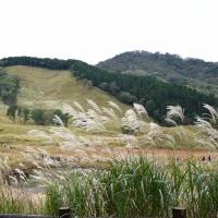 砥峰高原 (ススキまつり) 神崎郡神河町 2016.10.23
