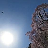 日野市ウォーキングG-4月12日、「石神前駅~青梅」午後・臨川庭園・金剛寺・梅岩寺