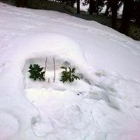 まだ雪の下です。お墓参り