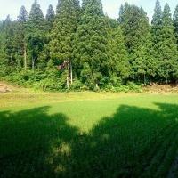田の水切り
