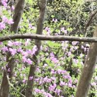 山小屋はまだまだ花盛りですが‼️