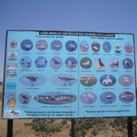 「東南アフリカ」編 ナミビア共和国 ナミブ砂漠20 ラグーン3
