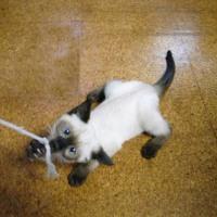 ネコは人間を不器用なネコと思っている