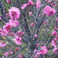 <もう 春は来てる。。。。>