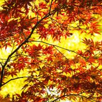 新宿御苑の紅葉