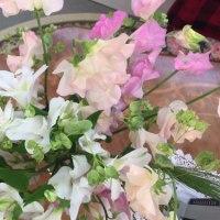 今週のお花177