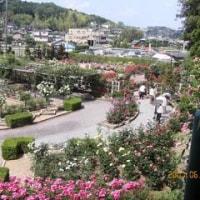 霊山寺のバラ園