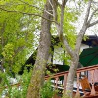 気温25度でも風が涼しい午後の森ウッドデッキ。