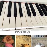 さぁ〜てと🎵雨の日曜日わ弾き篭もり?