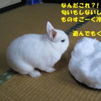 優しい記憶☆大雪と春の花♪