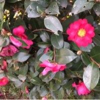 金曜日の庭 🌱 2017年1月13日