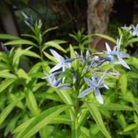 庭の花リレー
