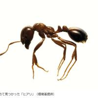 今日以降使えるダジャレ『2221』【社会】■毒針持つ「ヒアリ」新たに100匹確認…神戸