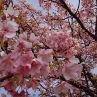 黄色と桜色