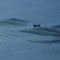 内瀬の海苔養殖漁場 (南伊勢町)