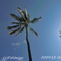 2009.12 ハワイ旅行