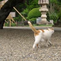シロちゃん、夏のお散歩コース