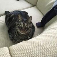 わが家の猫に癒される日々です♪♪