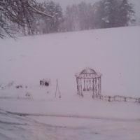 初雪 どっさり