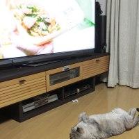 ごろ寝テレビ