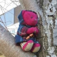 くゆっぺ日記~初木登りしました、の巻~