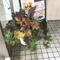 アロマタイムカフェ、夏物のお花に