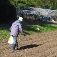 枝豆の収穫、麦の種まき