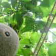 ウォン君うれしい「食の庭」