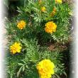 放置気味の小道花壇