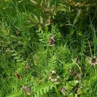 ナンテンの新芽、草の繁茂、カエデの葉。春の色の満開。
