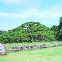 九州各県の県花・県木・県鳥