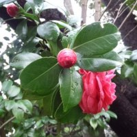 3月27、28日 桜が咲いた