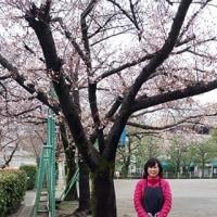 4月1日 花見会