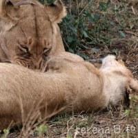 ネコライオン~名古屋テレピアホール