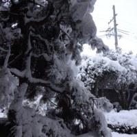 積雪 2016.01.23 07:28