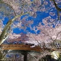 高遠城址公園  夜桜