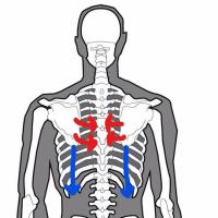 ゴルフ【スイング軸のねじれを修正】大切なのは「肩甲骨」