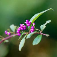 秋の花々と果実(赤塚植物園)