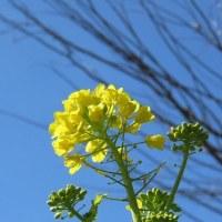 メジロと花