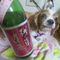 日本酒まつりで残草蓬莱を買う