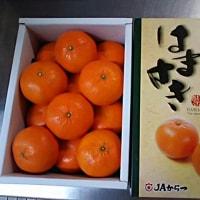 オレンジ(*^^*)