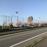 禁煙2525日目 「花見ポタ - その2 -」